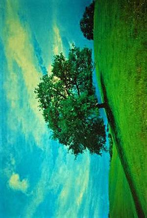 PP251B-LAME-OAK-TREE
